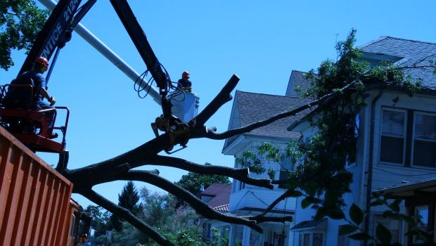 A 50 year-old oak crashed into a home in East Elmhurst. Park officials say over 1500 trees have fallen in the city.